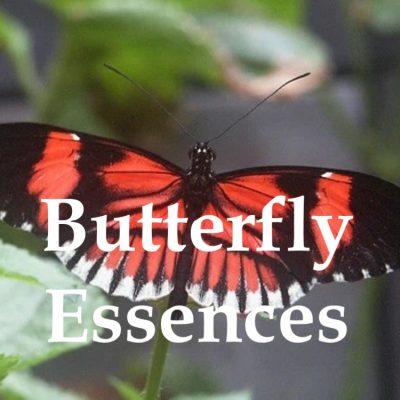 Butterfly Essences