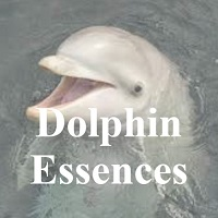 Dolphin Essences