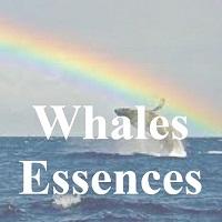 Whale Essences